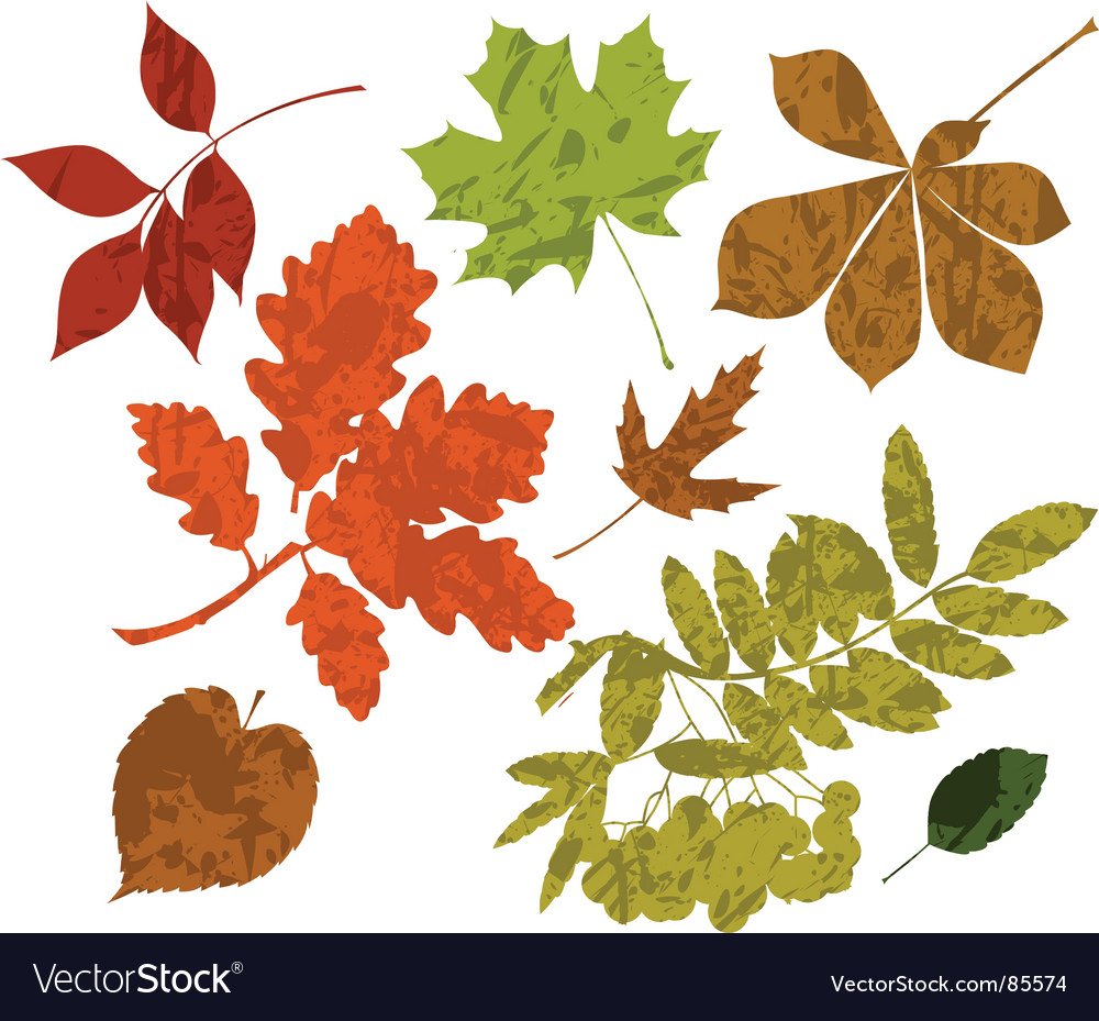 Grunge silhouettes of leaves vector