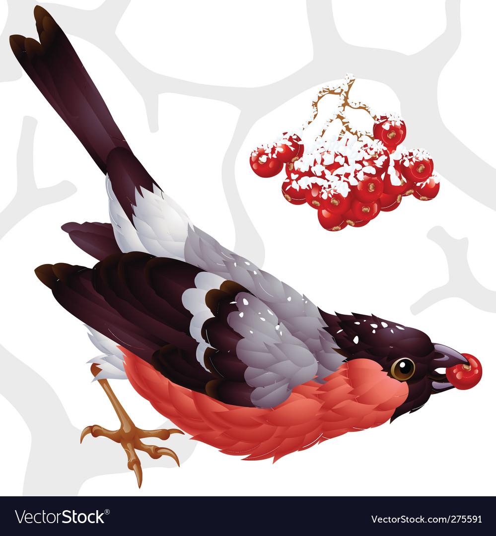 Bullfinch and ash berry vector