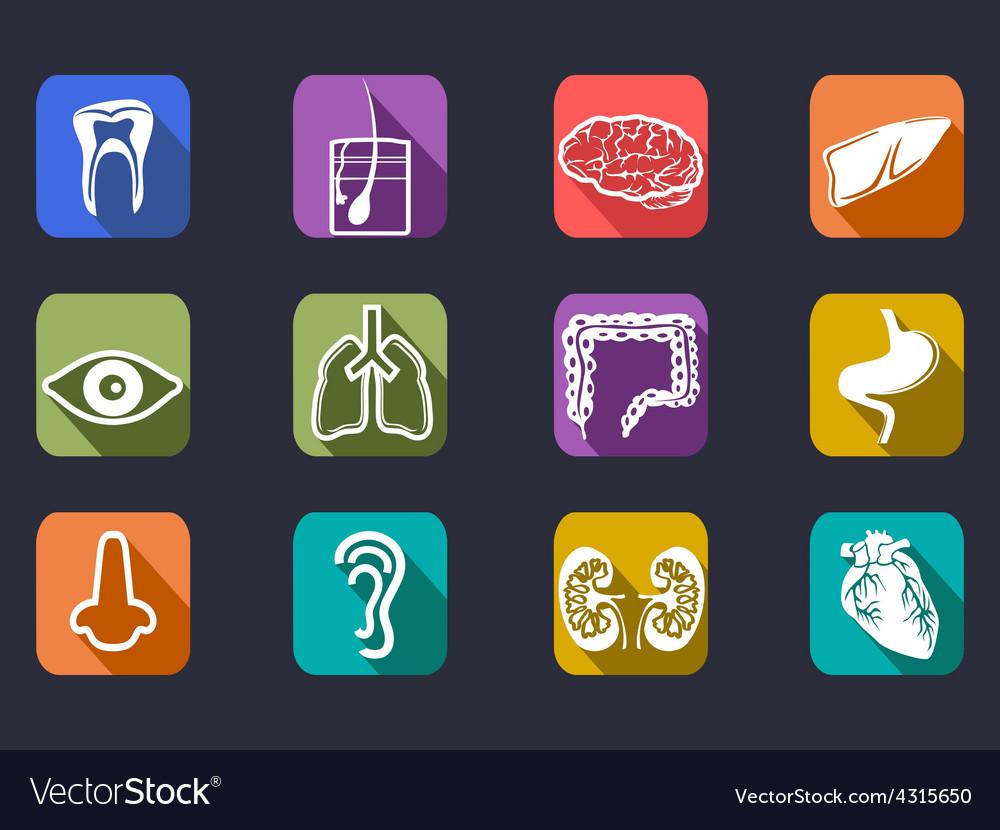 Human internal organs long shadow icons set vector