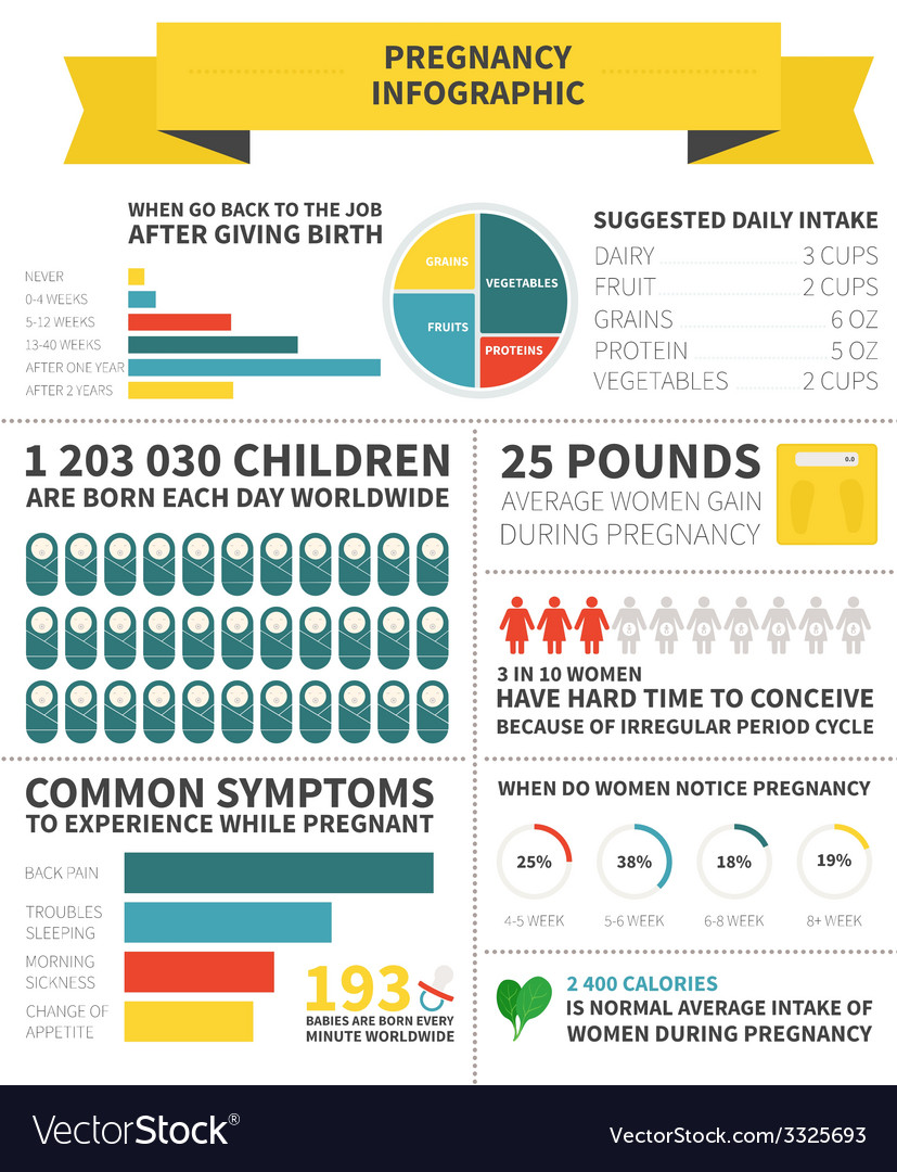 Pregnancy nutrition infographic vector