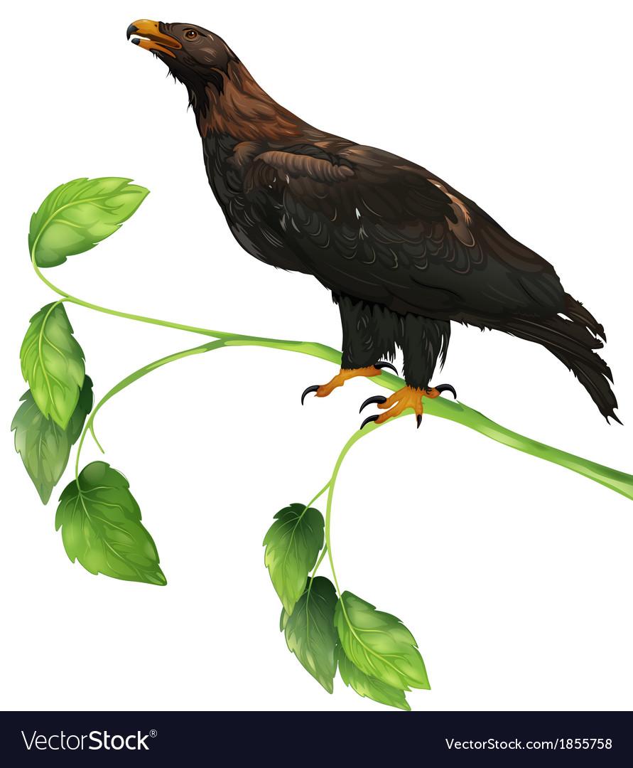 The eagle vector