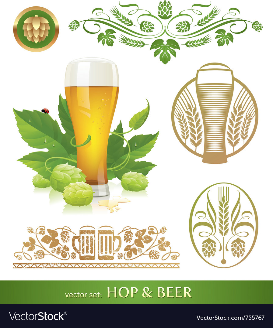 Set - beer hop and brewing vector