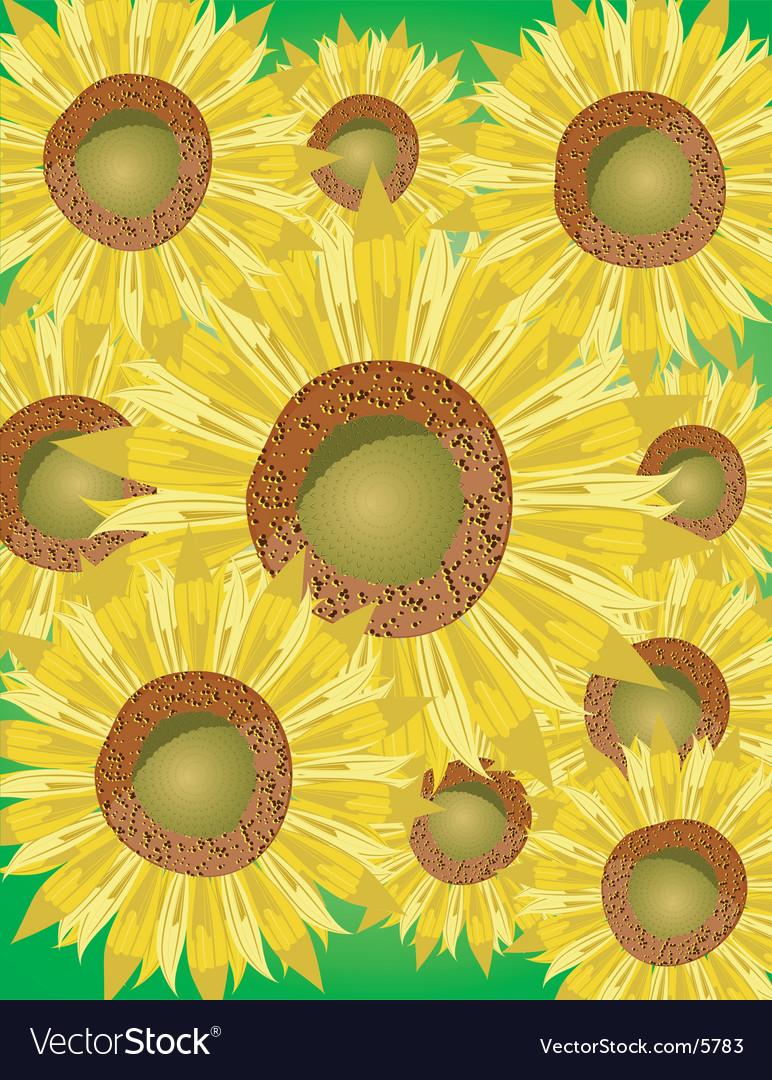 Sunflower bed vector