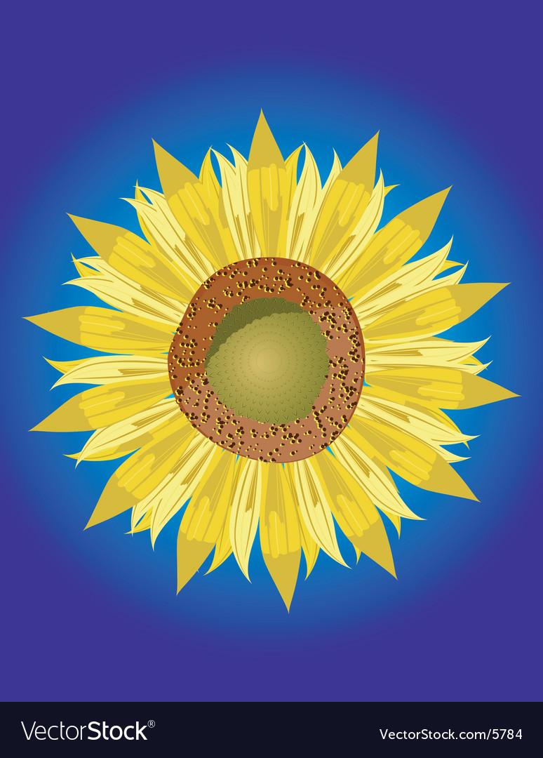 Single sunflower head vector