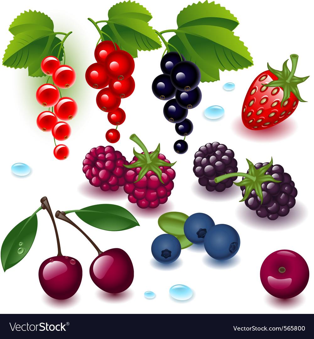 Collection berries vector