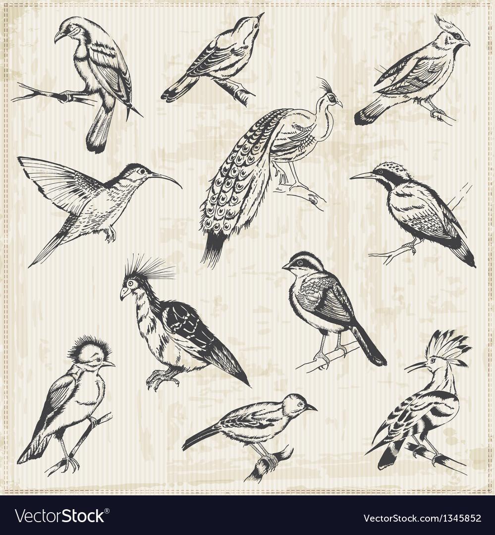 Hand drawn birds vector