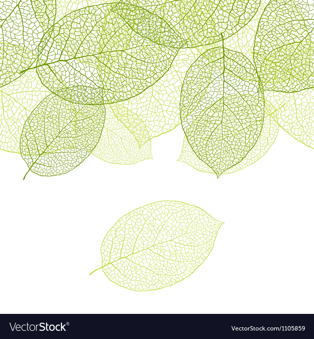 Fresh green leaves background - vector