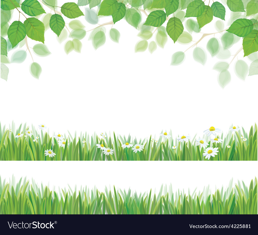 Leaves grass flowers vector