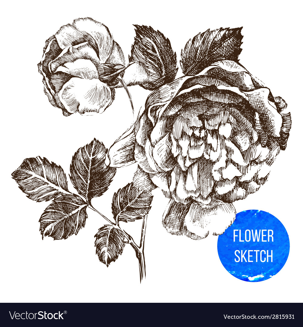 Hand drawn rose flower vector