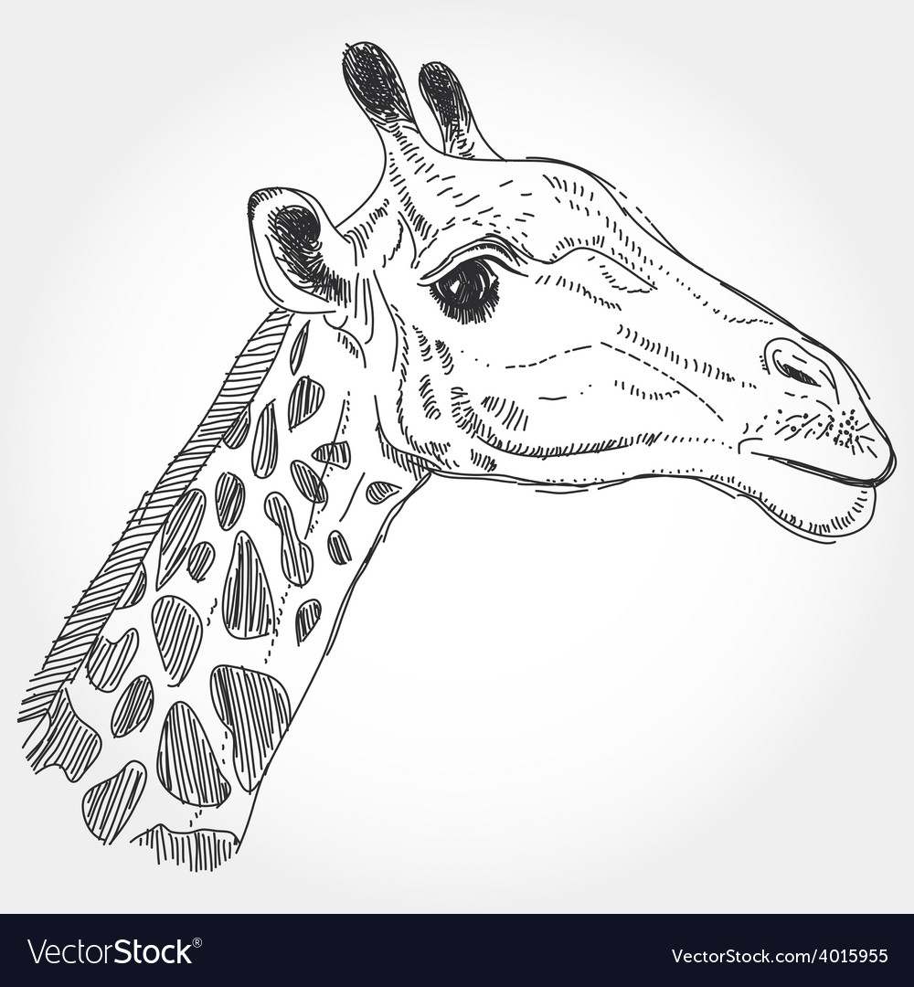 Giraffe isolated black contour on white background vector