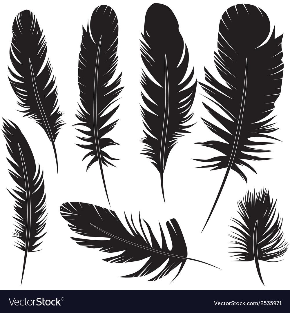 Feather of bird set vector