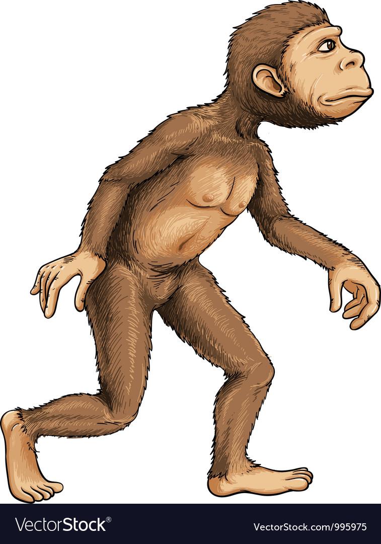 Evolving ape vector