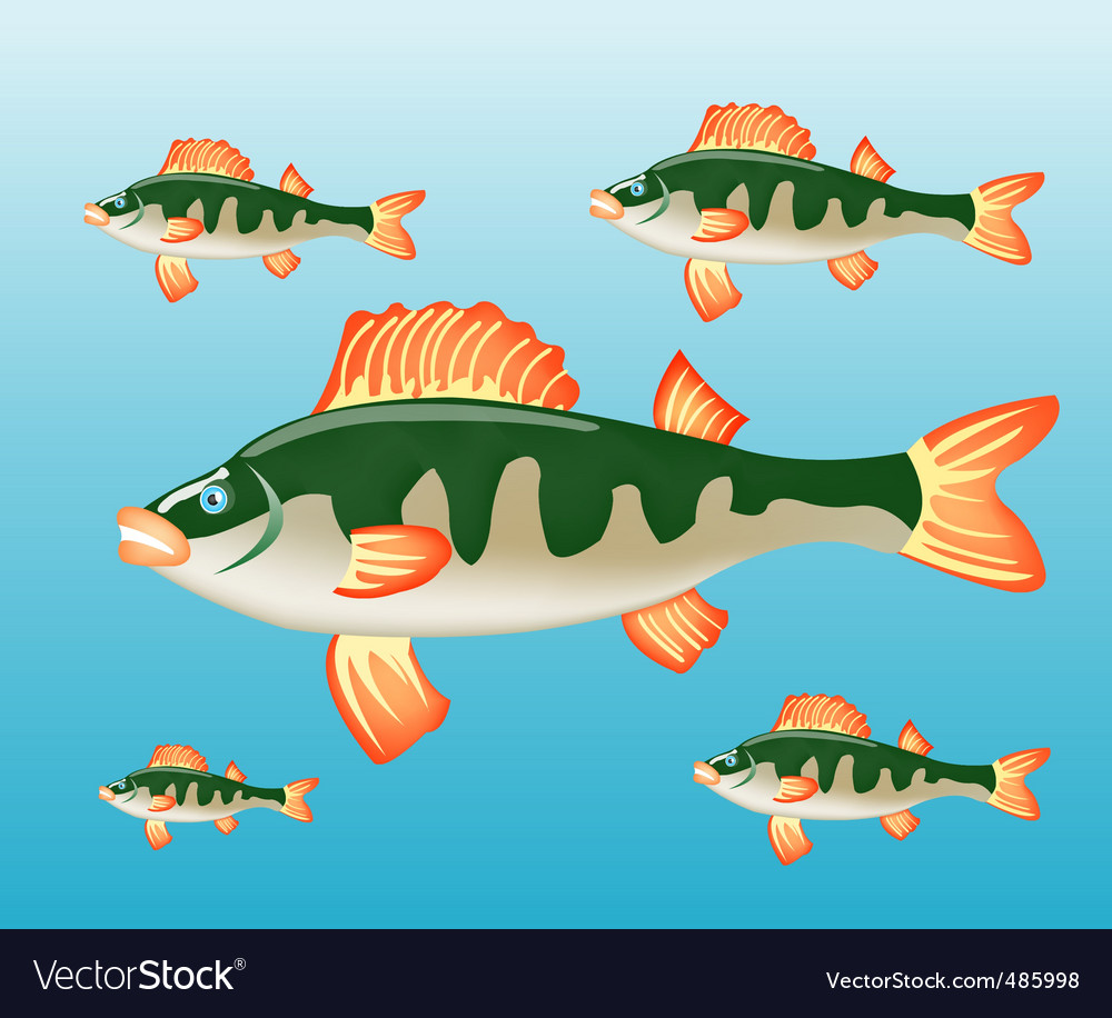 Fish perch in water vector
