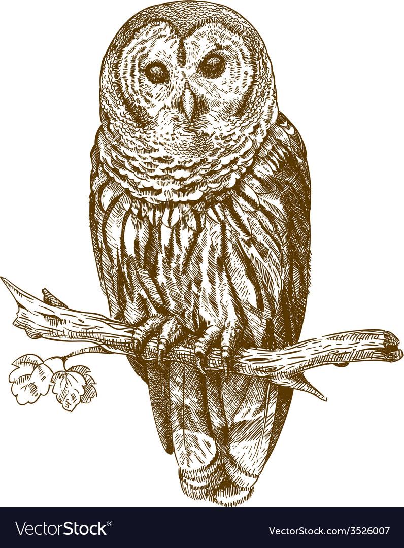 Engraving owl vector