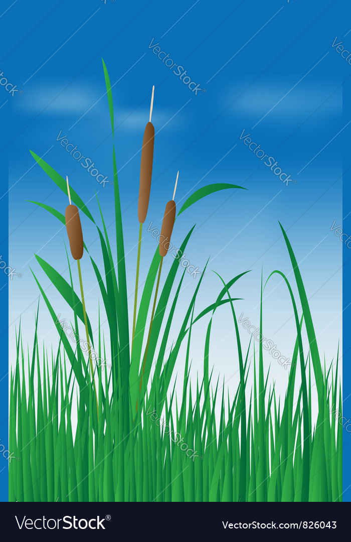 Reed plant over blue sky vector