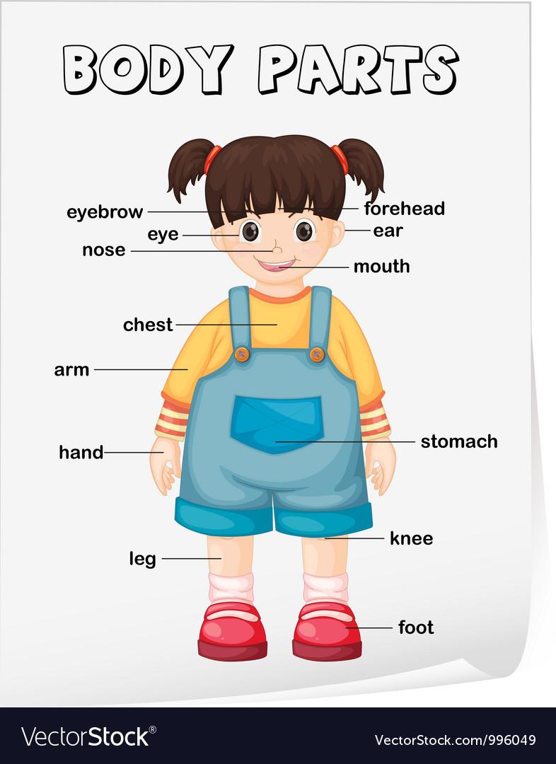 Body parts diagram poster vector