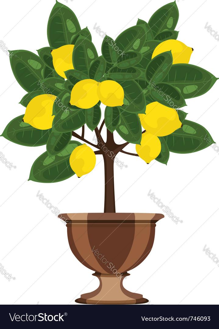 Lemon tree in a flowerpot vector