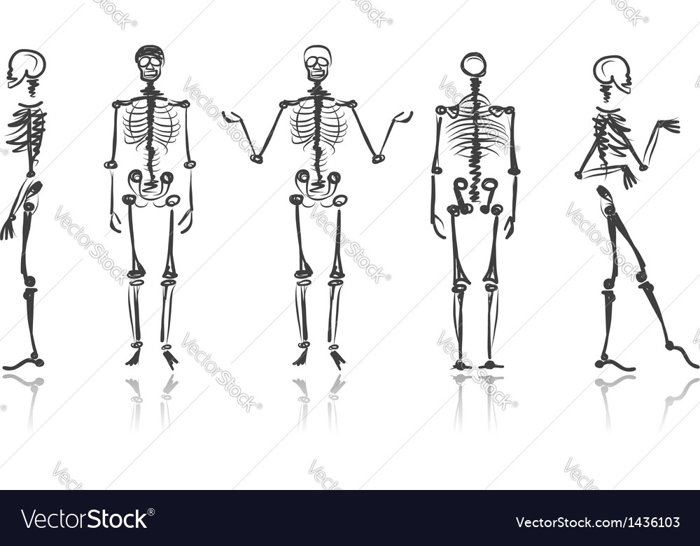 Skeleton sketches for your design vector