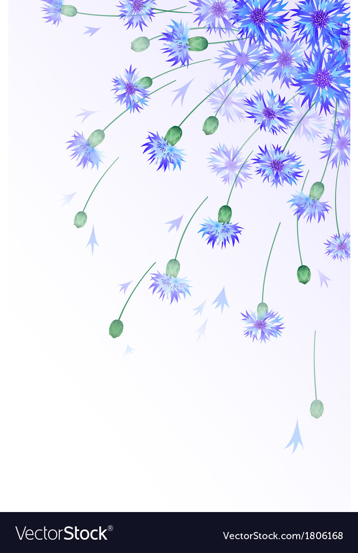 Vertical card with bluebottles vector
