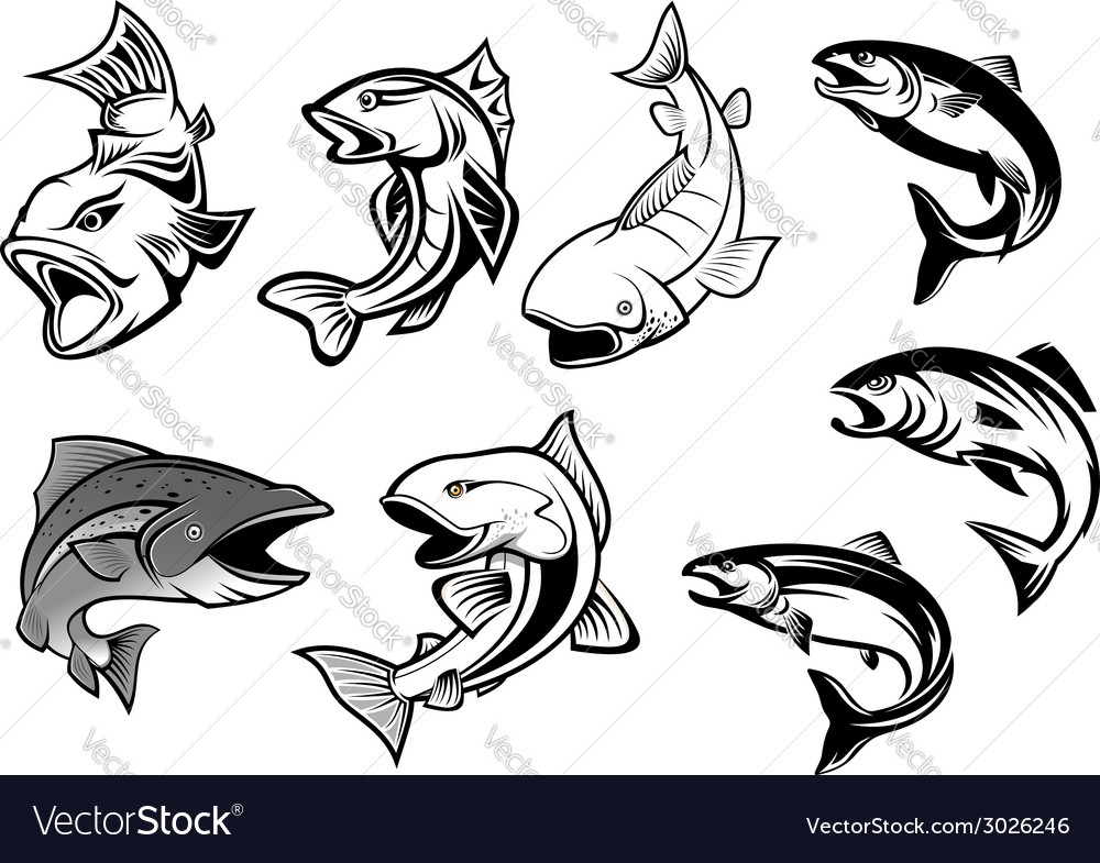 Cartoon salmons fish set vector
