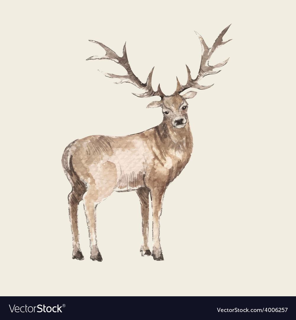Hand drawn deer watercolor style vector