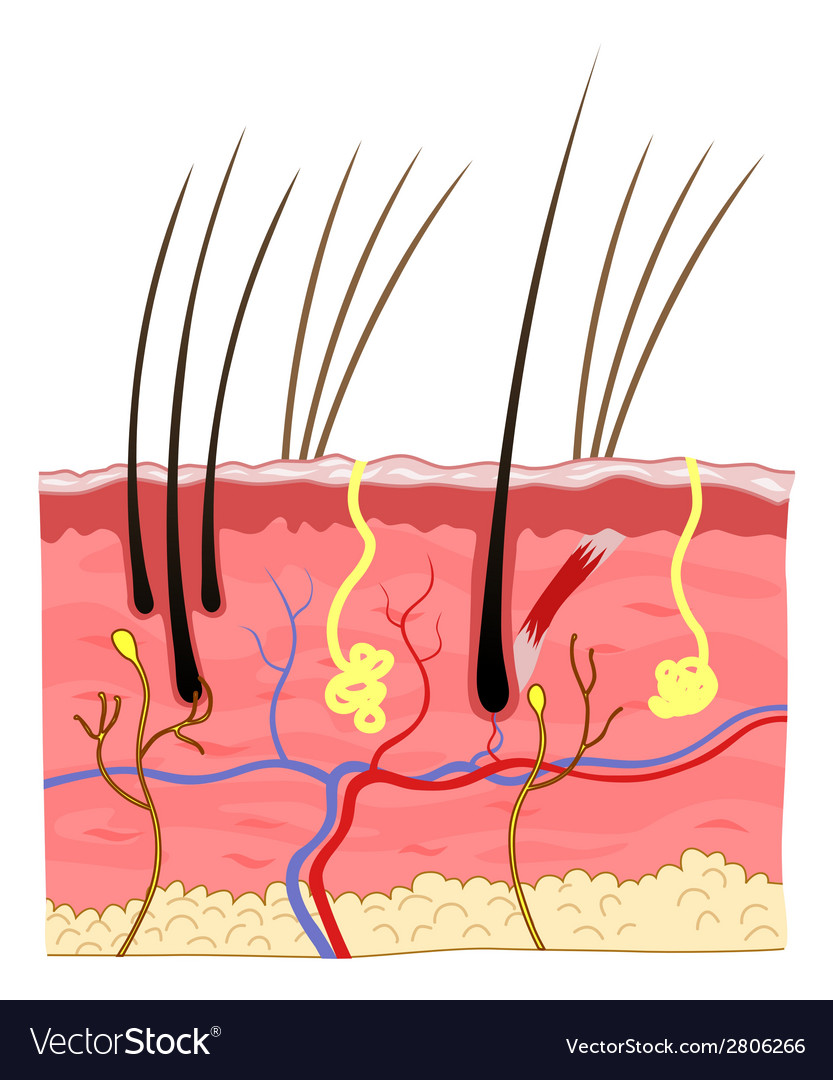 Cat skin structure vector