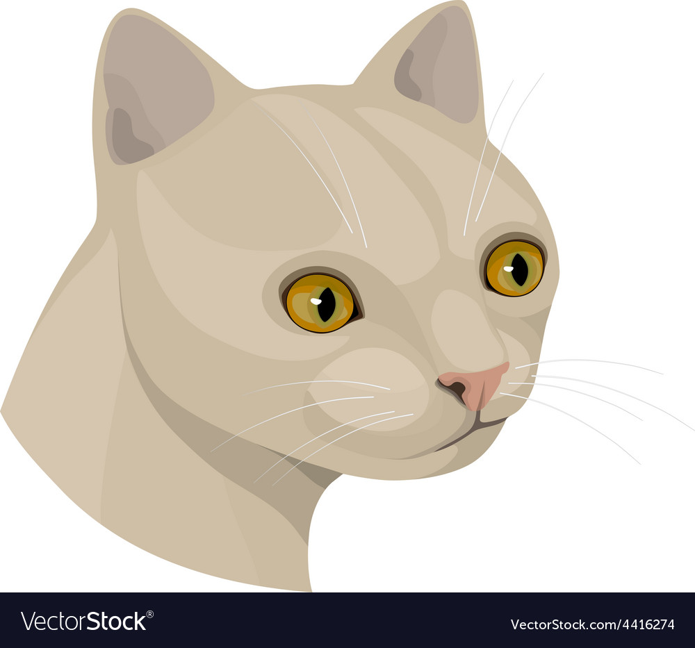 Cat with yellow eyes and pink nose vector