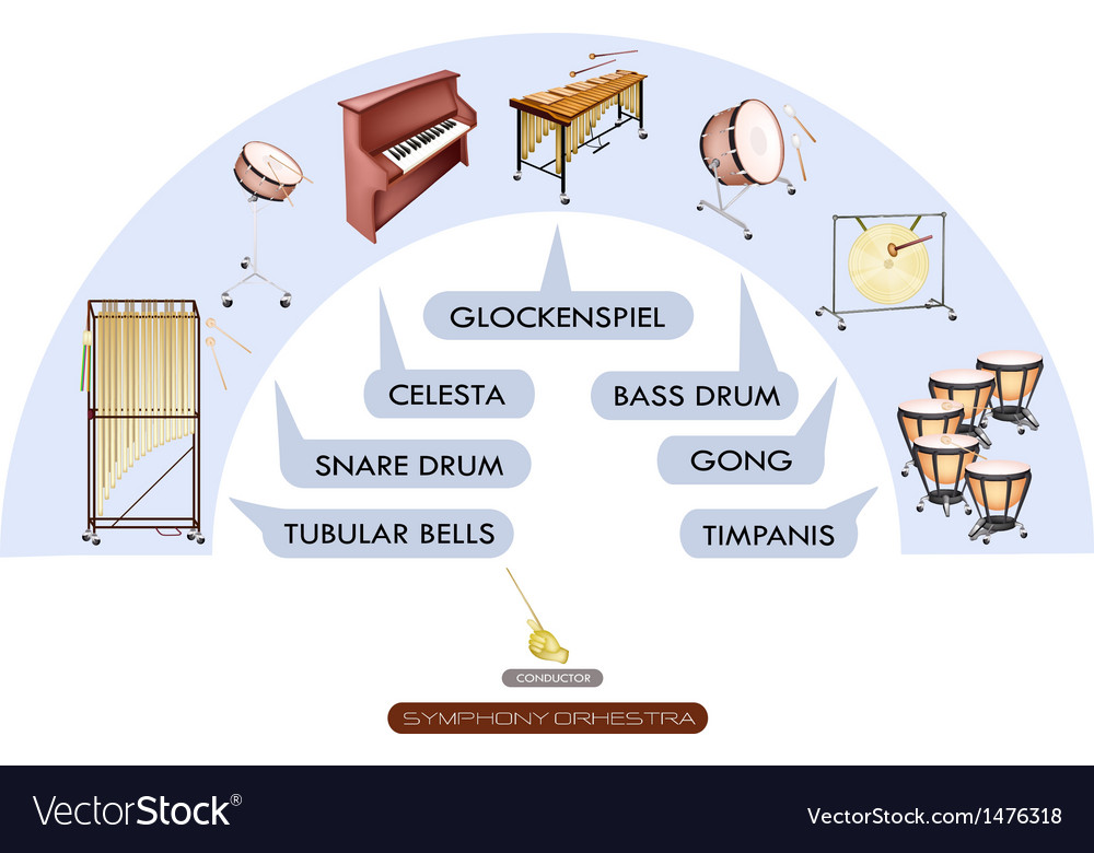 Seating chart percussion instrument vector