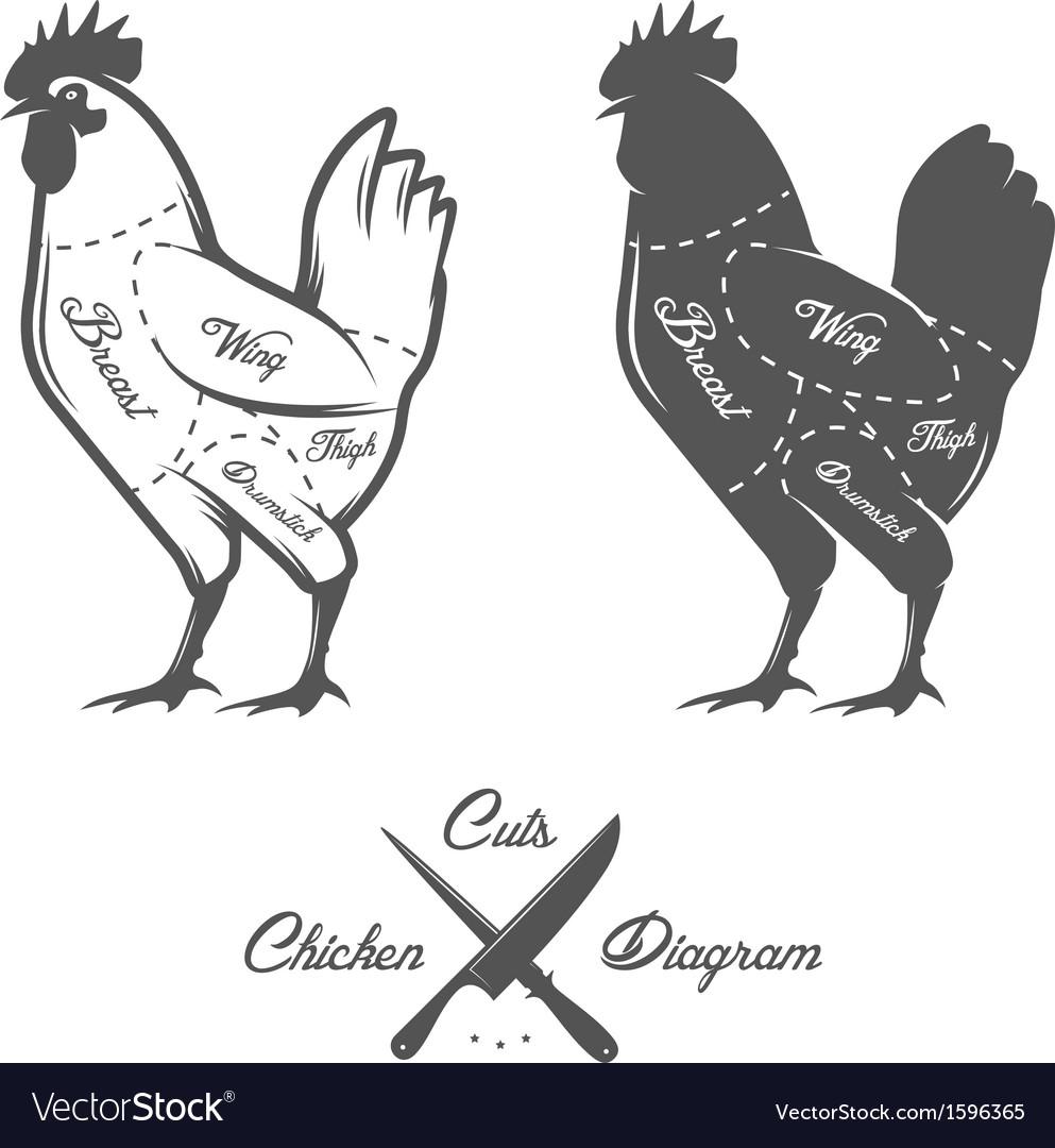 Chicken cuts diagram vector