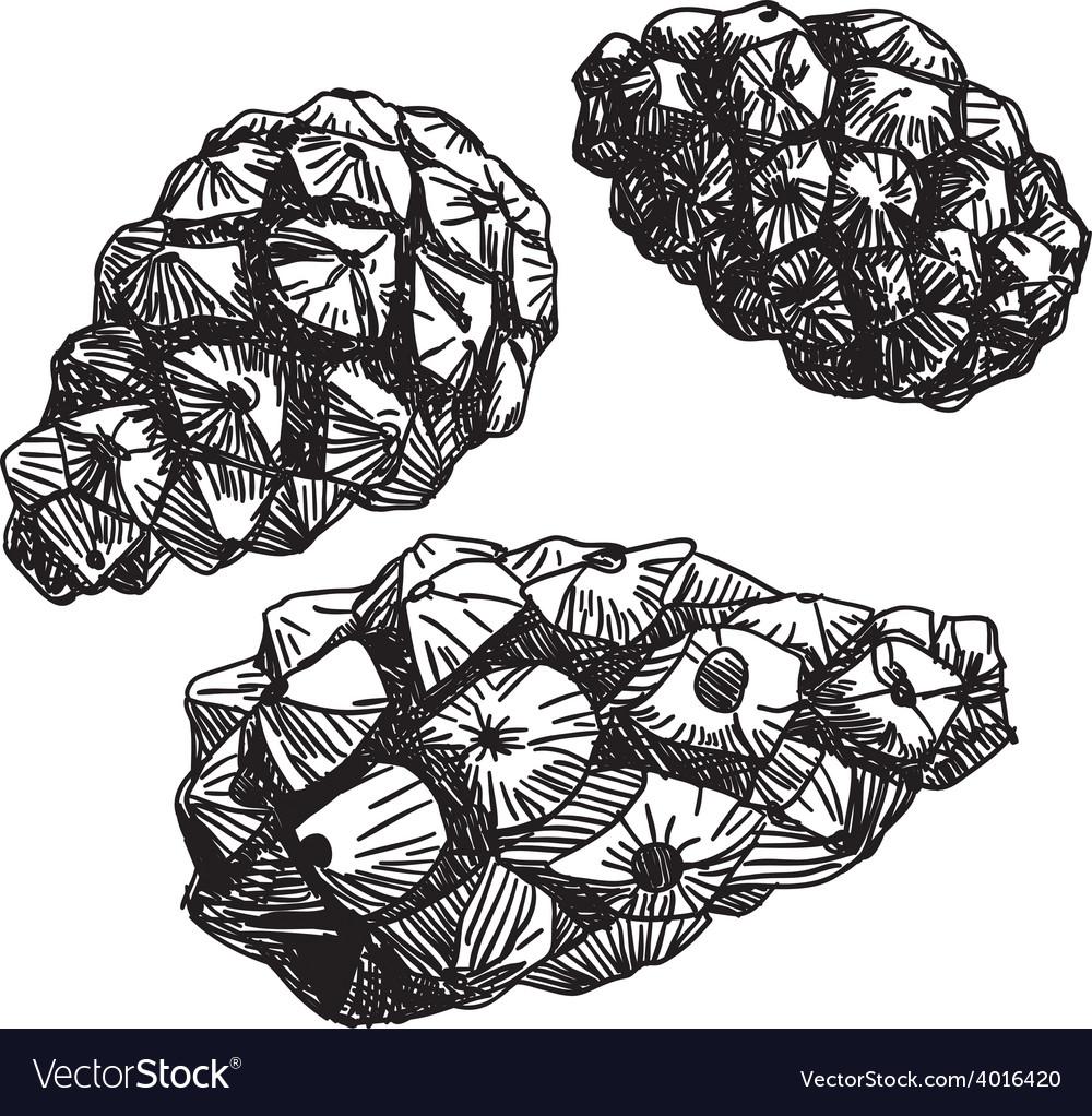 Set of pine cones black contour on a white vector