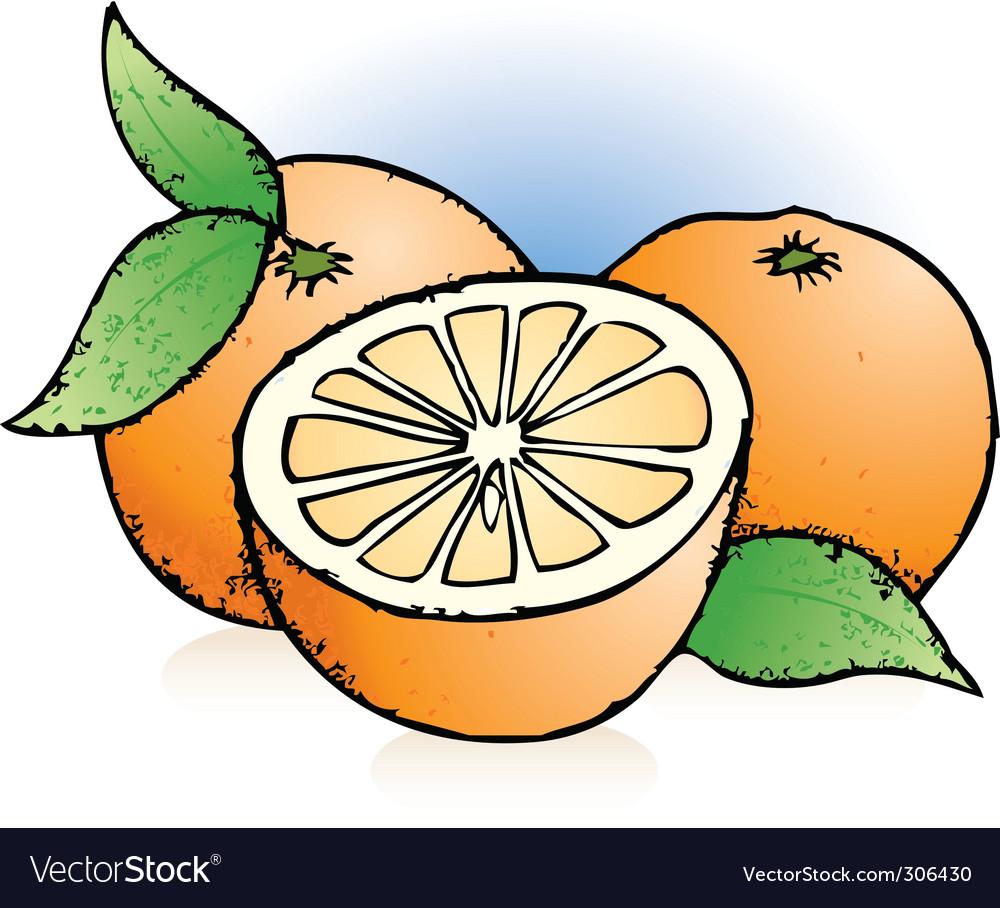 Oranges sketch vector