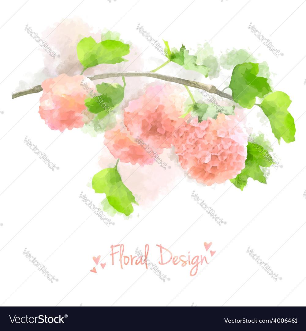 Watercolor flowers hydrangea vector