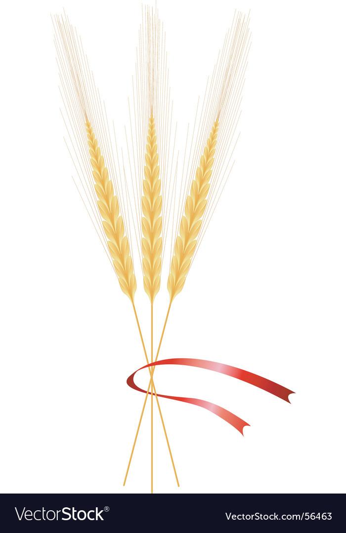 Wheat vector
