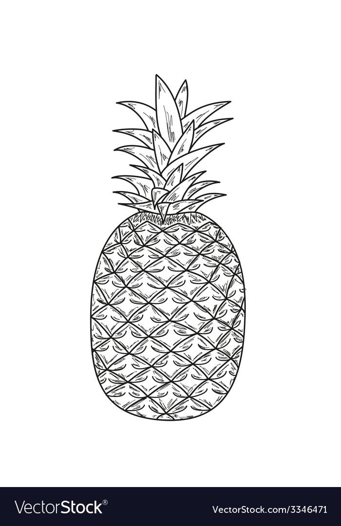 Ananas sketch vector