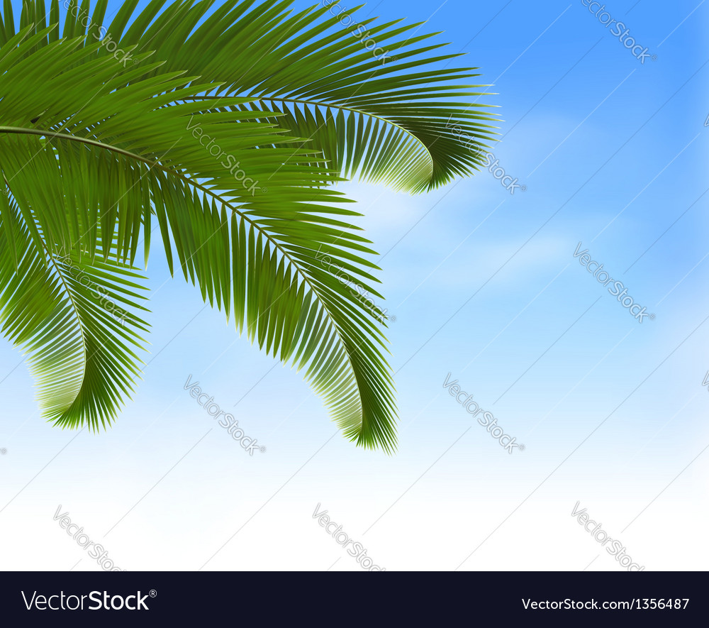 Palm leaves on blue background summer holidays vector