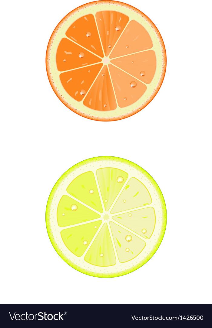 Lemon and orange slice vector