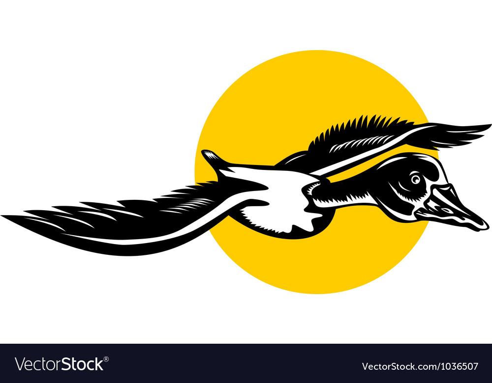 Mallard duck goose flying vector