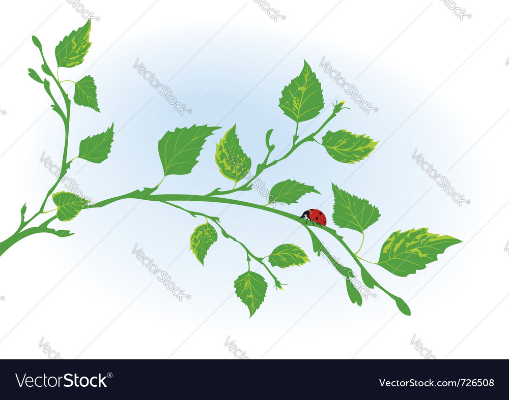 Branch of birch and ladybird vector