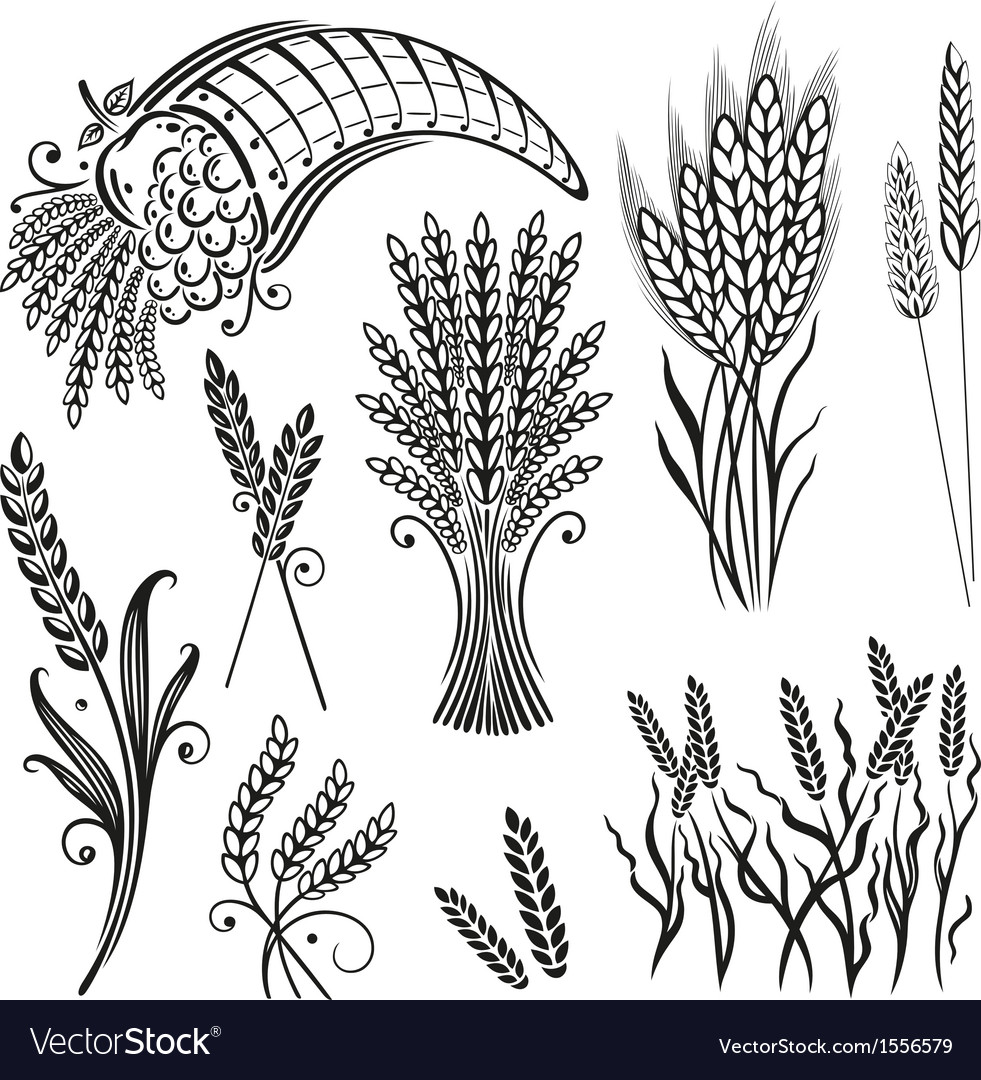Grain wheat bakery vector