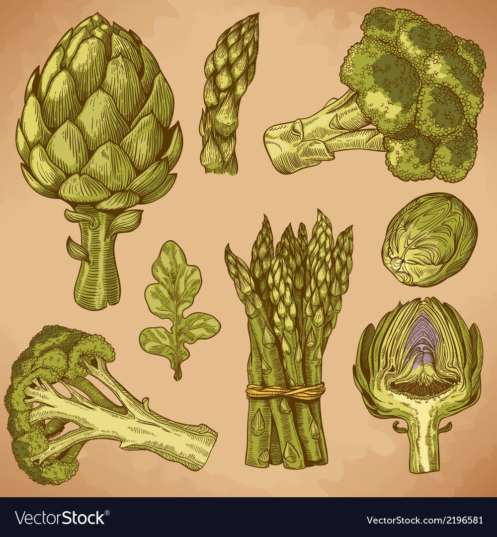 Engraving green vegetables retro vector