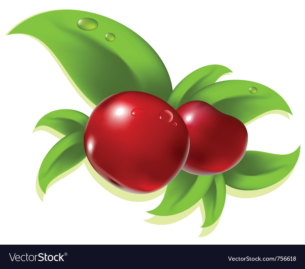 Red berry vector