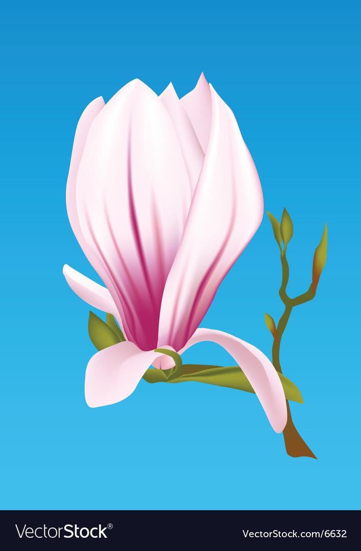 Magnolia plant vector