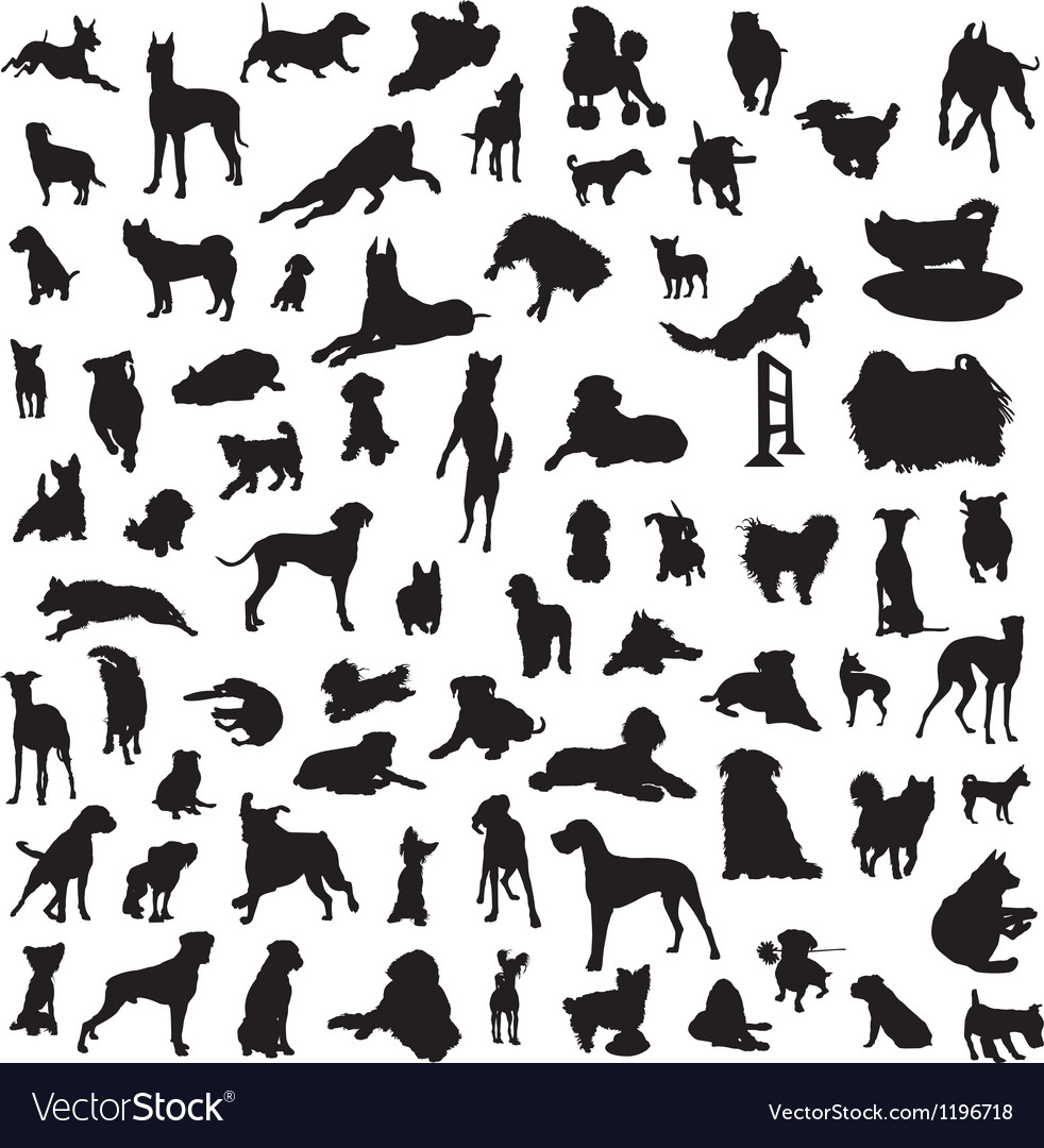Set of different breeds of dogs on a white backgro vector