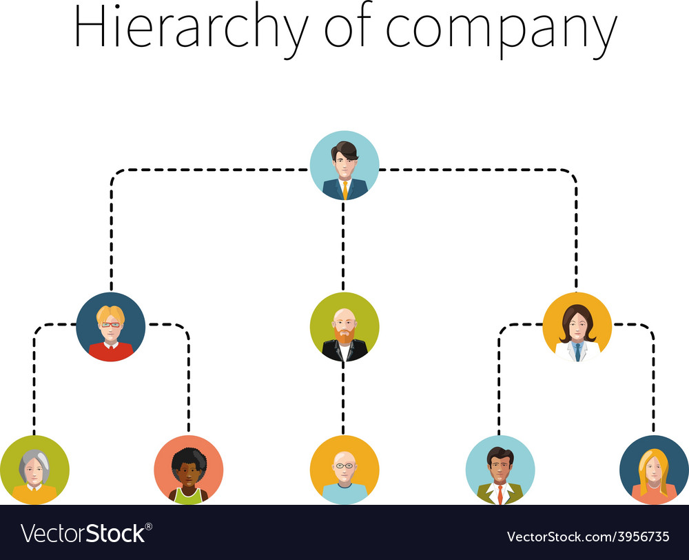 Hierarchy of company flat isolated vector