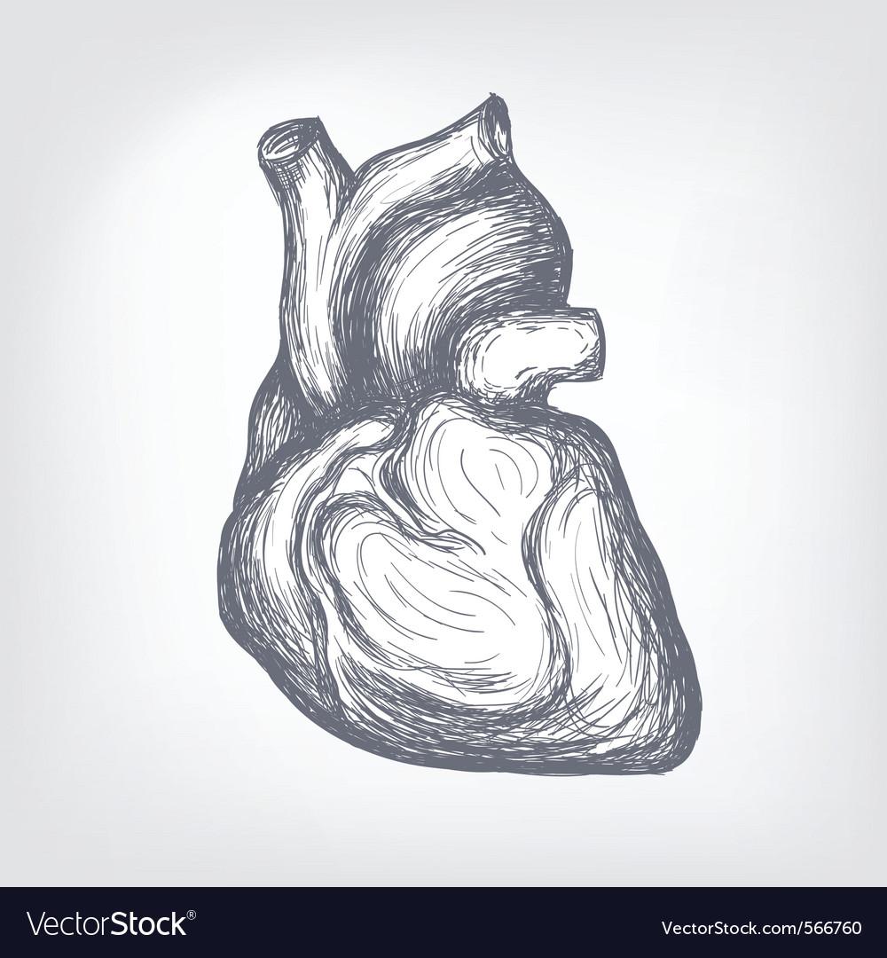 Human heart sketch vector