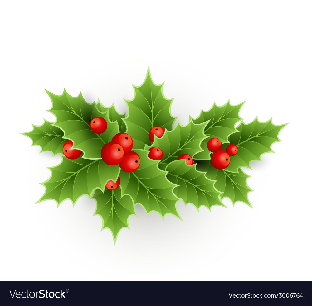 Christmas holly with berries vector
