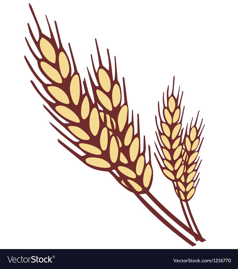 Wheat ear vector