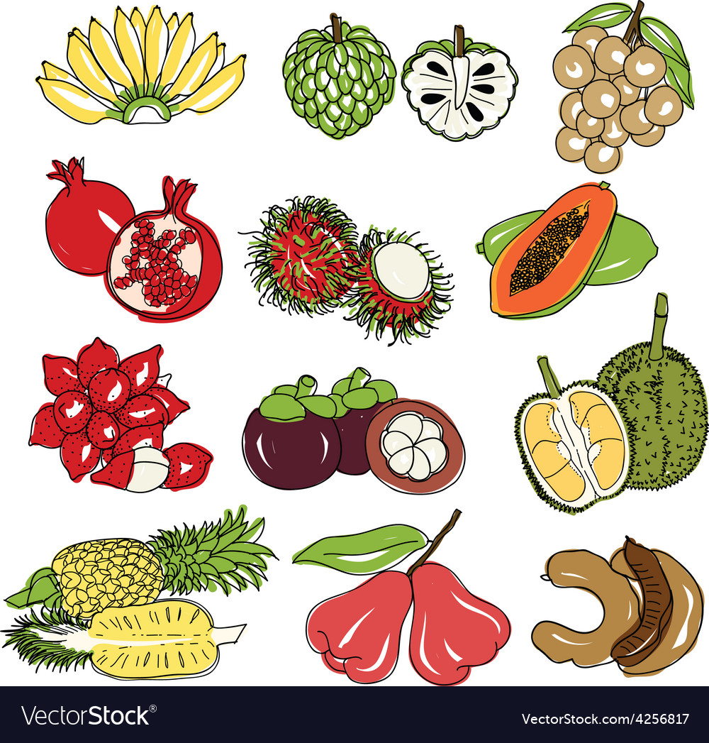 Thai fruits vector