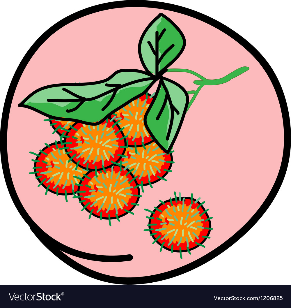 Fresh juicy rambutans on round pink background vector