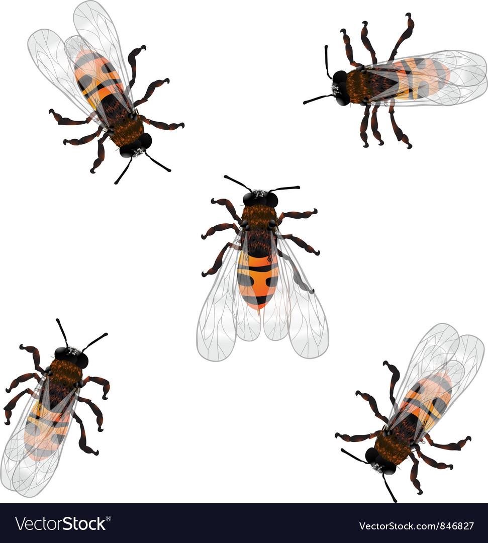 Working bees vector